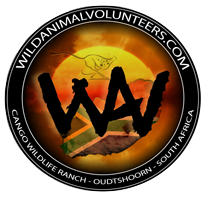 Wild Animal Volunteers - Volunteer Program South Africa